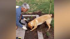 Sahibinin çiçek dikmesine yardım eden köpek