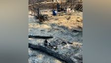 Tuğba Özay, yanan çiftliğinden video paylaştı