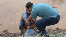 Zap Suyu'nda binlerce balık öldü, sağ kalanları ise düğüncüler kaptı