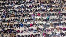 Van'da ekiplerin durdurduğu tırın dorsesinde 300 düzensiz göçmen yakalandı