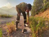 Gündoğmuş'taki yangında mahsur kalan kaplumbağa, orman işçilerince kurtarıldı