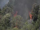 İtalya'da orman yangınları devam ediyor