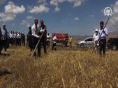 Sivas'ta metruk evde bulunan bir avuç ata tohumu buğdayın 500 dönüm hasadı yapıldı