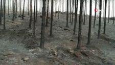 Muğla'da ormanlar alev alev yandı, tahribat gün aydınlanınca ortaya çıktı