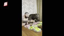 Rusya'da bir kişi evde beslediği ayısıyla yemek yedi