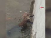 Elazığ'da havuzda mahsur kalan sansar, boruyla kurtarıldı