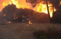 Orman yangınlarında milyonlarca arı kolonisi telef oldu
