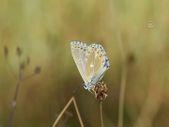 Van Gölü havzası, 230 kelebek türünü ağırlıyor