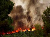 Yunanistan'da 500 bin dönümlük alan kül oldu