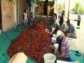 Gaziantep'te acı biberin çöpünü temizleyen kadınların mesaisi başladı