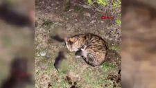 Başakşehir'de yavru kedileri kürekle öldüren şahsa 3 yıla kadar hapis istemi