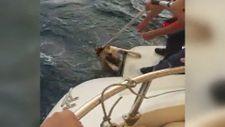 Yangından kaçarak denize sığınan köpek, ekipler tarafından kurtarıldı