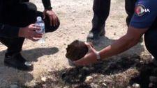 Karaman'da alevlerin arasında kalan kaplumbağayı polis ekipleri kurtardı
