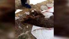 Tunceli'de kayalıklardan düşen yavru ayıyı jandarma kurtardı