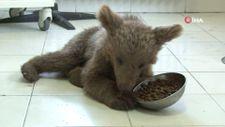 Tunceli'de yaralı yavru ayı tedavi altına alındı