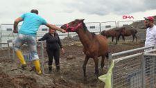Artvin'de tır parkında ölüme terk edilen atlar, çiftlikte korumada