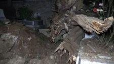 Şehitlikte tarihi çınar ağacı mezarların üzerine devrildi