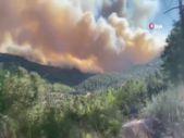 Kudüs'te orman yangını