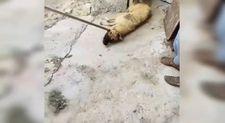 Siverek'te tepki çeken görüntü: Köpeği sürükleyerek çıkarttı