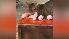Etrafındaki farelere aldırmayan kedi