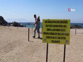 İzmir'de çiçek açan kum zambaklarını koparmanın cezası 80 bin TL