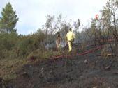 İstanbul Pendik'te ormanlık alanda çıkan yangın kontrol altına alındı