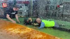 ABD'de timsah, terbiyecisinin koluna saldırdı
