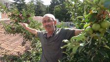 Amasya'da bir ağaçta 6 çeşit elma yetiştirdi