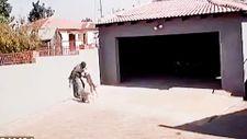 Afrika'da bahçeye giren hırsızı pitbull parçaladı