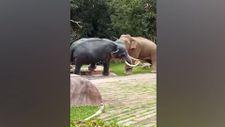 Tayland'da öfkeli fil heykeli yıktı