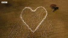 Avustralyalı çiftçi, teyzesini anmak için koyunlarla kalp çizdi