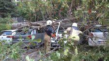 Kadıköy'de kestane ağacı park halindeki 4 aracın üzerine devrildi