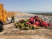 Antalya'da kaçak midyecilere suçüstü