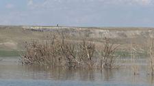 Kars'ta kuraklık nedeniyle baraj suyu çekildi, ağaçlar ortaya çıktı