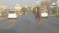 Bursa'da başıboş at ana yolda trafiği altüst etti