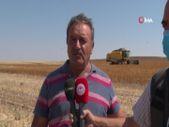 Kayseri'de hibe destekli 'Aspir' hasadı başladı