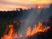 Brezilya Amazonlarında yangınlar ağustos ayında beş kat arttı