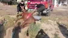 Aksaray'da fosseptik çukuruna düşen at itfaiye ekiplerince kurtarıldı