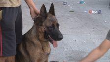 Başakşehir'de dükkan sahibi yangından 12 saat sonra köpeklerini buldu