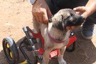 Elazığ'da, felçli yavru köpeği yeniden ayağa kaldırdı