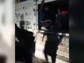 Van'da kamyon kasasındaki çimentoların altından 78 kaçak göçmen çıktı