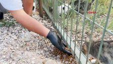 Çorum'da karantinaya alınan şahıs kedileri için yardım istedi