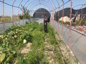 Türkiye'de az yetişen ve Çin'den tohumunu getirterek ürettiği mor çilekte taleplere yetişemiyor