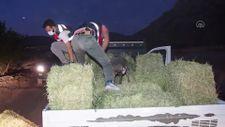 Denizli'de yonca yüklü kamyonette 285 kilogram esrar ele geçirildi
