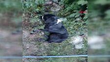 Kahramanmaraş'ta yaralı köpek için 200 kilometre yol gitti