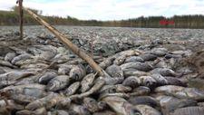 Kırklareli'ndeki gölette balıkları öldüren işletmeye 96 bin lira ceza