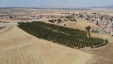 Eskişehir'de arabasını satarak büyüttüğü ormanı miras bıraktı