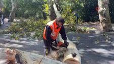 Sarıyer'de asırlık ağaç şiddetli rüzgar nedeniyle kırılarak devrildi