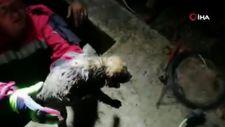 Muğla'da sulama kanalına düşen yavru köpek kurtarıldı