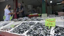 Balıkçıların hamsi sezonu, erken bitecek endişesi